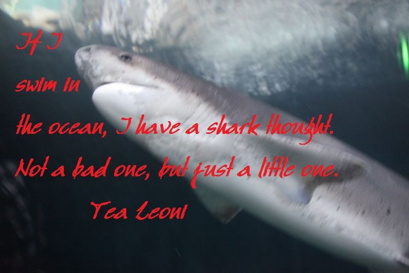 if_i_swim_in_the_ocean__i_have_a_shark_thought__not_a_bad_one__but_just_a_little_one_-large
